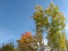 golf-course-autumn